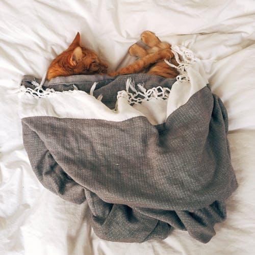 ペットと泊まれる宿
