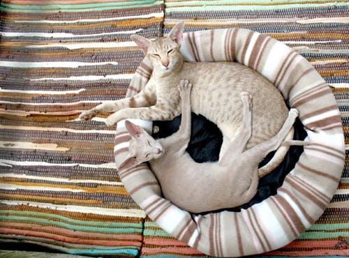 """九州 """"看板猫がいる宿6選"""" では猫もOKです"""