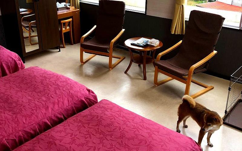 中部静岡県伊豆で愛犬と泊まれる宿