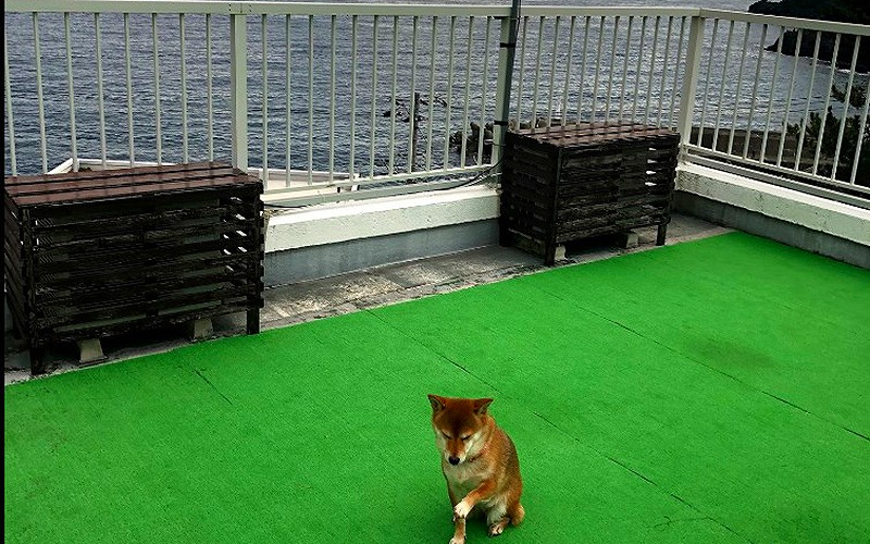 中部静岡県伊豆で愛犬と宿泊