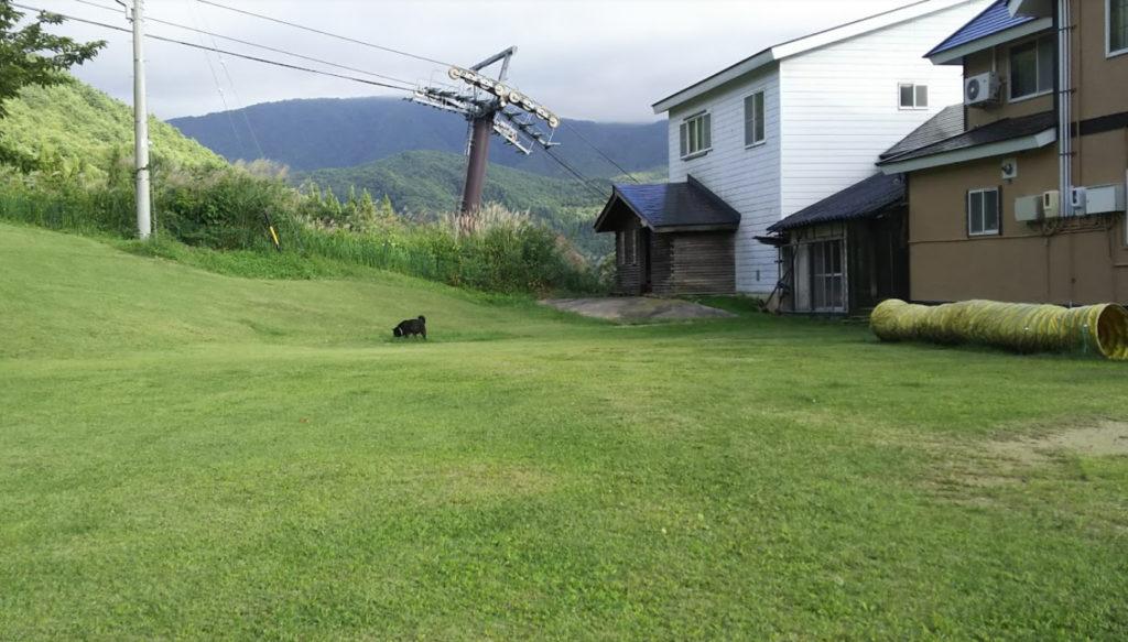 犬と泊まれる宿 長野県 よませ温泉「 パディントンハウス 」