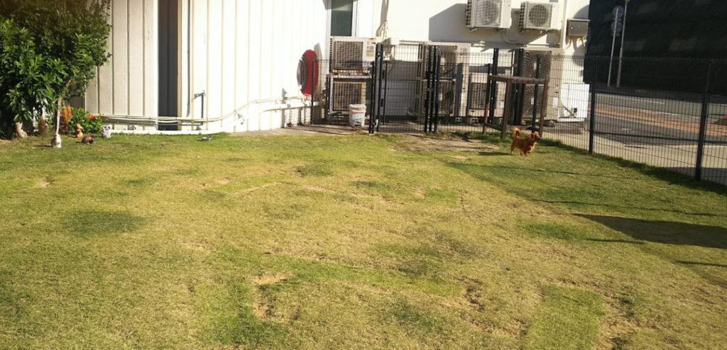 犬と泊まれる宿 和歌山県 「 動物愛護団体の犬御殿 」