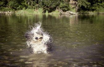 愛犬との旅行に必要な持ち物7選