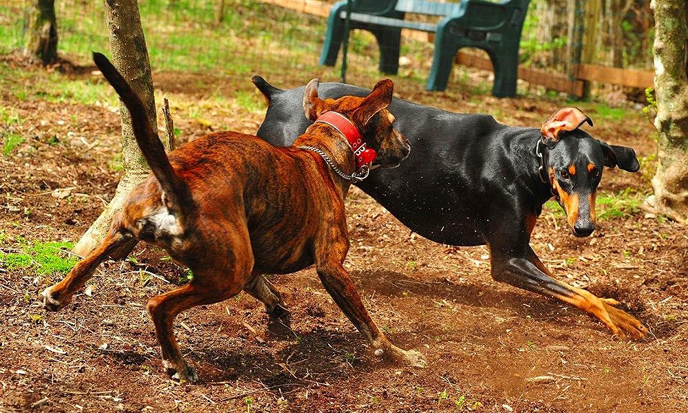 山梨県山中湖で愛犬と宿泊