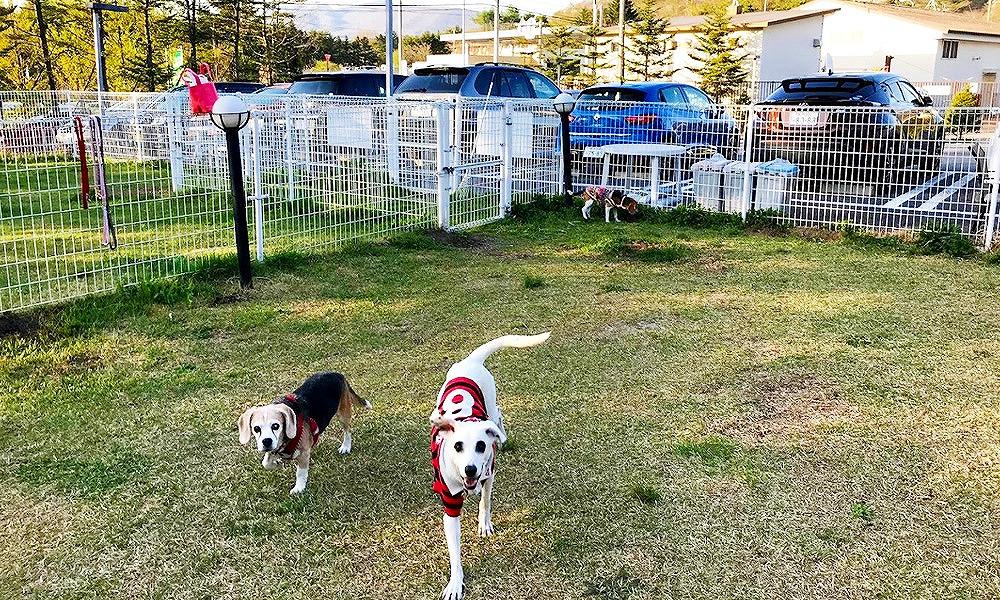 長野県軽井沢で愛犬と宿泊