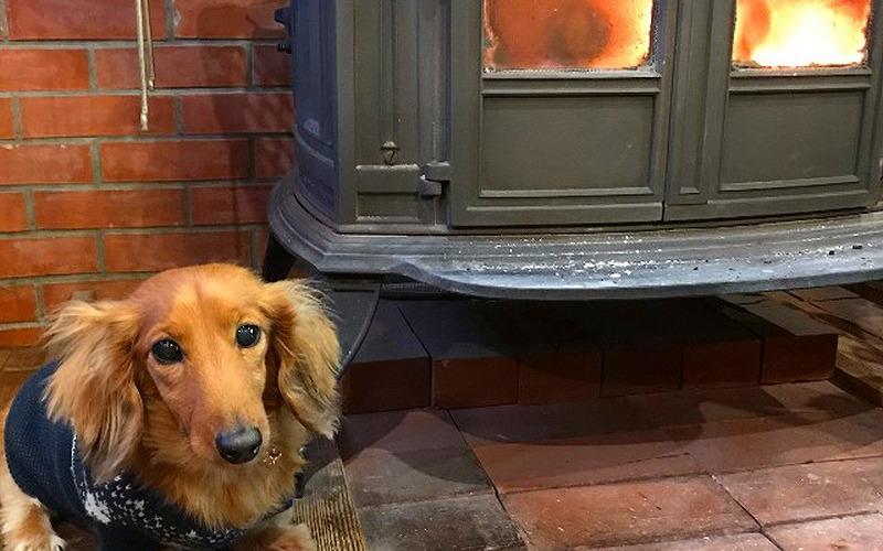 山梨県清里高原で犬と泊まれる宿