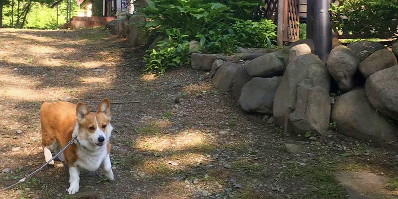 山梨県八ヶ岳でペットと泊まれる宿