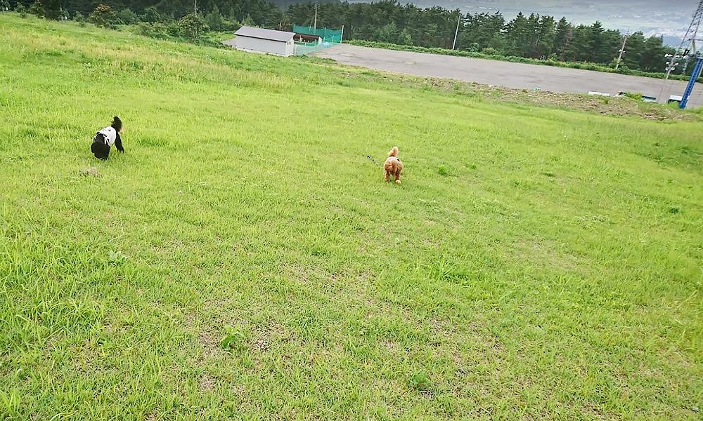 ペンションビッグフォレスト 長野県木島平村でペットと泊まれる宿