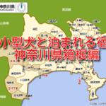 小型犬とペットと泊まれる宿 6選 神奈川県箱根編