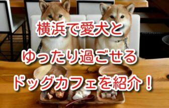 ドッグ カフェ 横浜